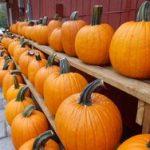 *Local Pumpkins