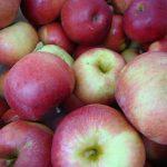 *Local Ida Red Apple