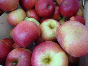 Ida Red Apple