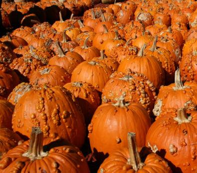 *Local Wart Pumpkins
