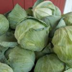 *Local Cabbage
