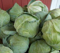 *Local Cabbage