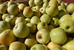 * Local Crispin Apples