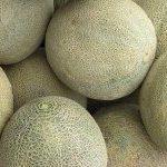 *Local Cantaloupe