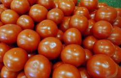 *Local Tomatoes