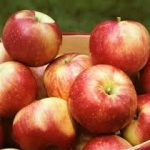 * Local Zestar Apples