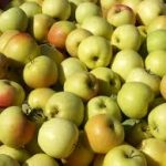 Yellow Delicious Apples